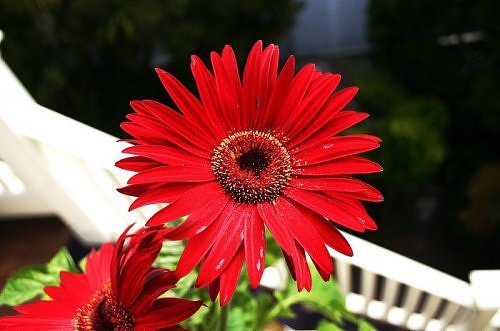 Beauty of RED-2491178330106522538s500x500q85-jpg