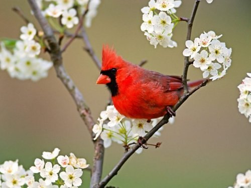 Beauty of RED-2072191840106522538s500x500q85-jpg