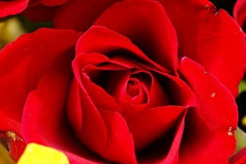 Beauty of RED-2936178870106522538s500x500q85-jpg