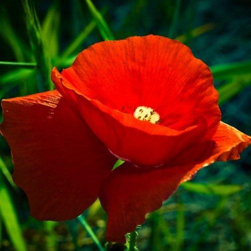 Beauty of RED-2414742010106522538s500x500q85-jpg