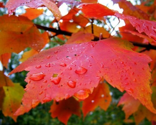 Beauty of RED-2663527360106522538s500x500q85-jpg