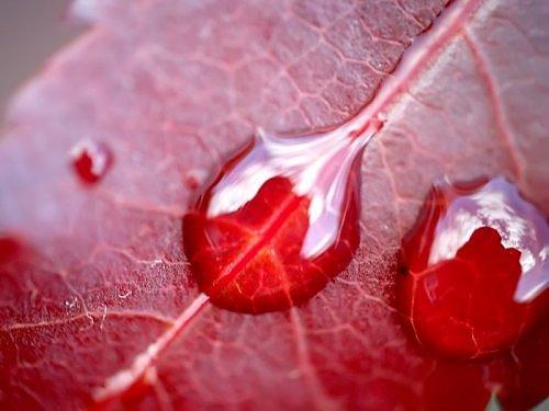 Beauty of RED-2860667270106522538s500x500q85-jpg