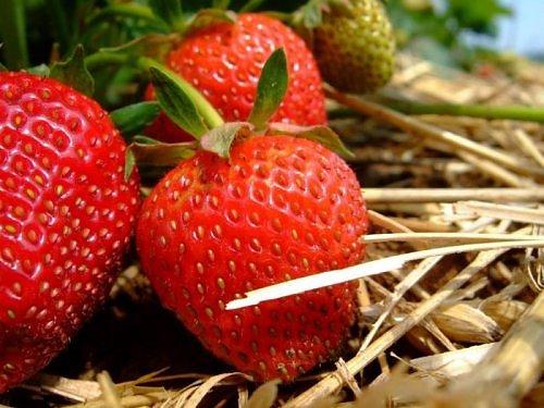 Beauty of RED-2198392420106522538s500x500q85-jpg