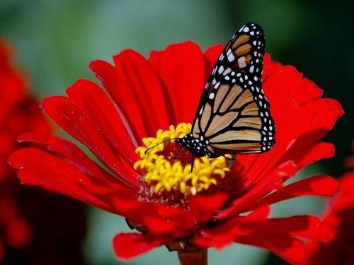 Beauty of RED-2712859240106522538s500x500q85-jpg