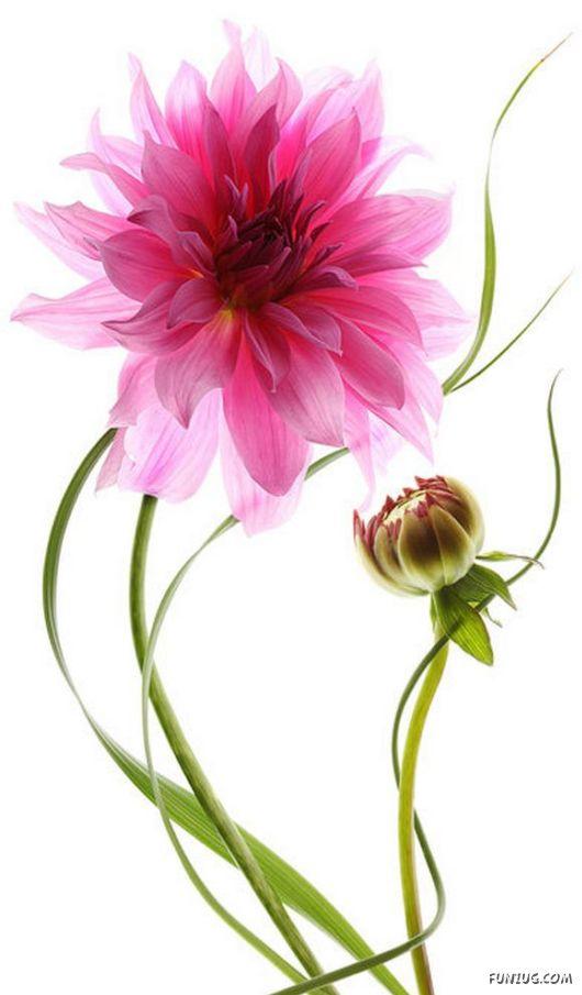 flowers cute  most popular flower garden, Beautiful flower