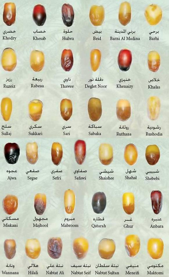 Various Types of Dates with Their Names-types-khajoor-jpg