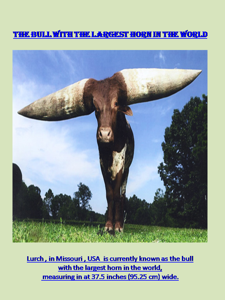 The big and large animals-slide5-png