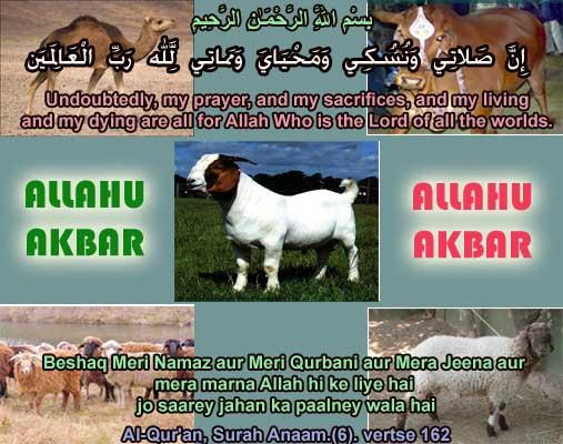 Image result for qurbani hadith